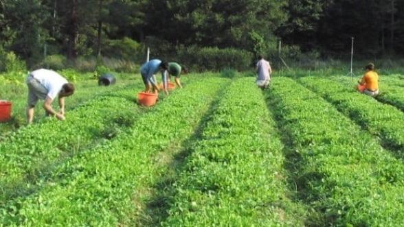 """""""Romania, paradis al agriculturii ecologice""""- mai mult mit decat realitate"""