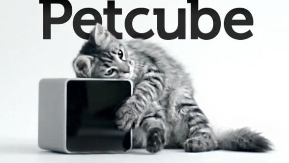 VIDEO. Petcube, o bijuterie de inalta tehnologie pentru cei care au animale de companie