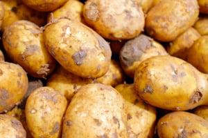 1.100 de tone de cartofi au fost oprite la granita din cauza unei bacterii periculoase