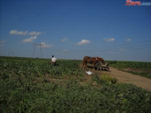 155 de cetateni straini care au terenuri agricole in Romania au cerut fonduri prin APIA. 119 au si primt bani, in 2016