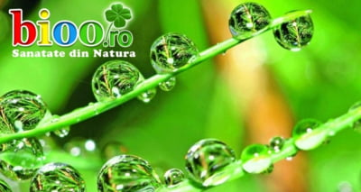 3 alternative Bioo pentru un sistem imunitar intarit
