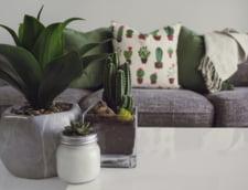 3 livinguri minimaliste pentru inspiratia ta