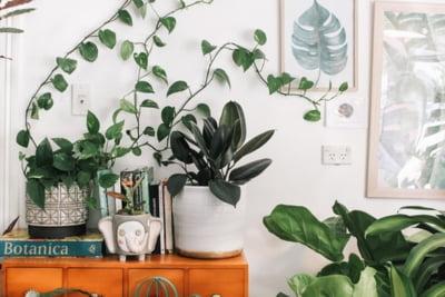 7 plante de interior pentru a-ti incepe propria jungla de apartament