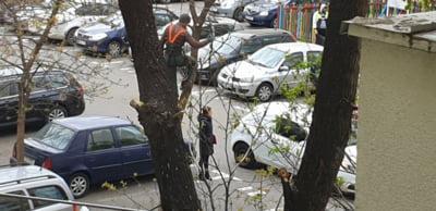 A inceput masacrarea arborilor in Bucuresti. Specialistii avertizeaza: Vom avea copaci bolnavi, poluare mai mare si se pierd bani. Primariile tac malc