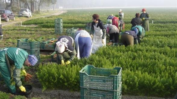 ANAF inchide 300 de firme din strainatate: Muncitorii ce lucreaza temporar nu sunt detasati