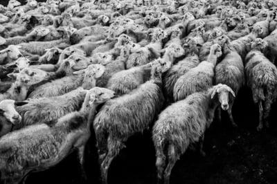 ANSVSA, despre vaporul rastunat la Midia: Incarcarea cu animale a navei s-a facut respectand legislatia