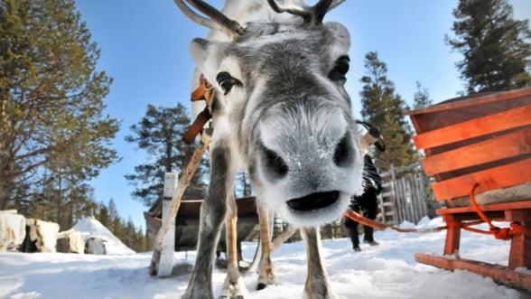 Acasa la Mos Craciun - minunile turistice ale Laponiei