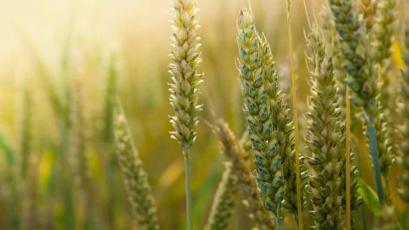 Afla secretul profitului liderilor de piata din agricultura: solutiile ERP
