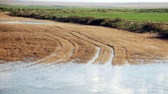 Agricultorii afectati anul trecut de calamitati ar putea fi scutiti de impozit