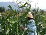Agricultorii incep protestele