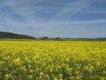 Agricultorii nu vor mai primi ajutoare de stat din 2010