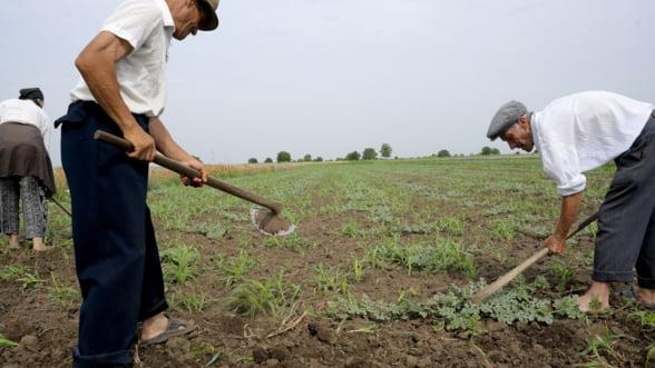 """Agricultura, victima unor legi """"cosmetizate"""" si prost aplicate. Liberalizarea terenurilor, comasarea si cadastrarea lor"""