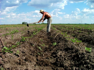 Agricultura a amortizat impactul crizei asupra statelor din Europa de Est