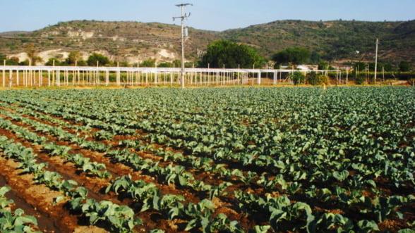 Ajutoarele de stat pentru agricultori depasesc 15 miliarde de lei in 2013. Pentru ce se vor primi bani?