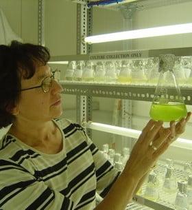 Alternative la benzina: biocombustibilul din microalge