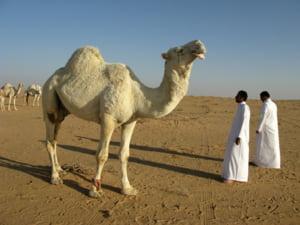 Arabia Saudita va construi un oras in valoare de 500 de miliarde de dolari la Marea Rosie