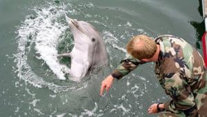 Armata rusa a preluat controlul asupra delfinilor de lupta ucraineni