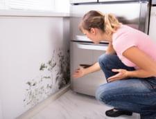 Asigurarea unei ventilatii corecte - primul pas in eliminarea mucegaiului de pe pereti