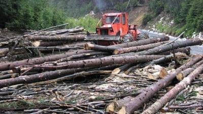 Asociatiile din domeniul forestier considera suma de 220 de milioane euro pentru paduri prin PNDR, foarte mica
