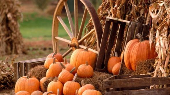 Atestatul de producator agricol a fost aprobat. Vezi actul in baza caruia poti vinde produsele