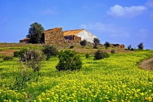 Bancile romanesti, interesate sa finanteze investitiile din agricultura