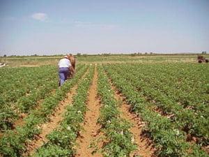 Basescu sustine marirea taxei pentru terenurile agricole nelucrate