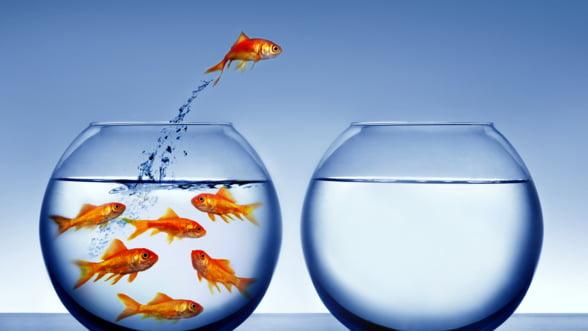 Blue Ocean Strategy: Cum sa generezi rapid idei geniale