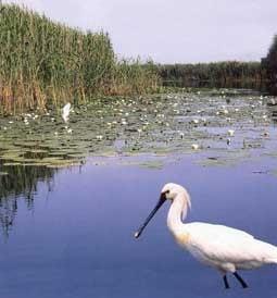 Bulgaria vrea sa reia proiectele de constructie a doua hidrocentrale pe Dunare