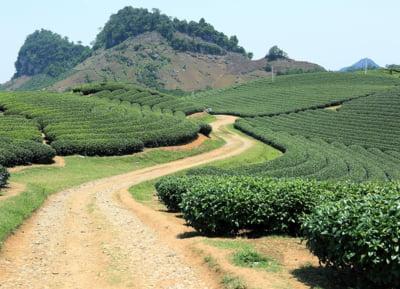 Cafeaua s-a ieftinit din cauza supraofertei iar cultivatorii refuza acum sa mai vanda