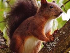 Cat a costat in total amenajarea spatiului pentru veveritele din Bistrita
