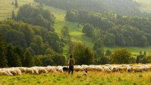 Cat se castiga in Romania din oierit. Fiul unui cioban sustine ca tatal sau i-a facut cadou 4,5 milioane de euro