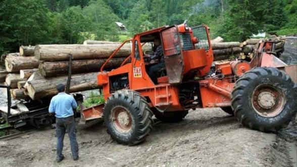 Ce amenzi a dat statul operatorilor care activeaza in domeniul exploatarii lemnului