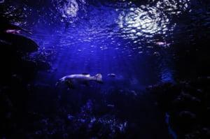 Ce atingem distrugem - Jumatate din speciile marine au disparut din cauza omului