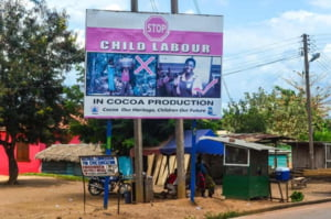 Cele mai puternice companii de ciocolata din lume, acuzate de sclavie. Mii de copii ar fi fost exploatati pe plantatiile de cacao