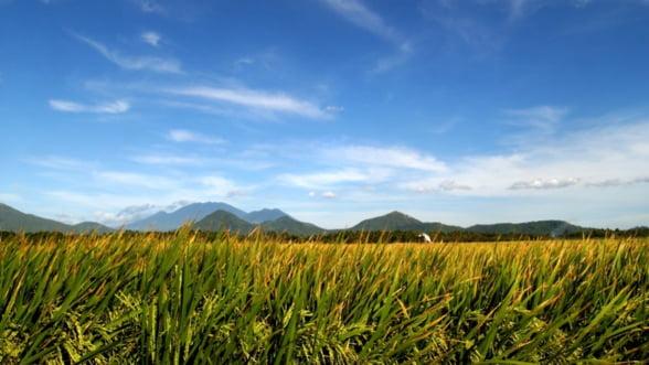 Cerealele ecologice romanesti, solicitate in cantitati mari si la preturi ridicate in SUA