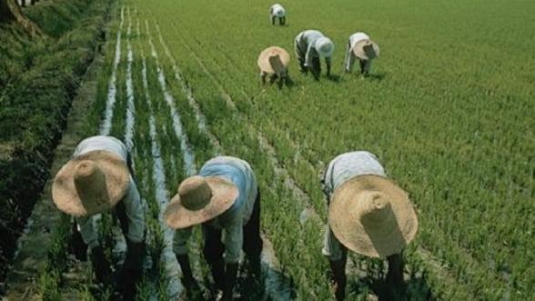 China, granarul Europei, ar putea dicta pretul si pe piata cerealelor din Romania
