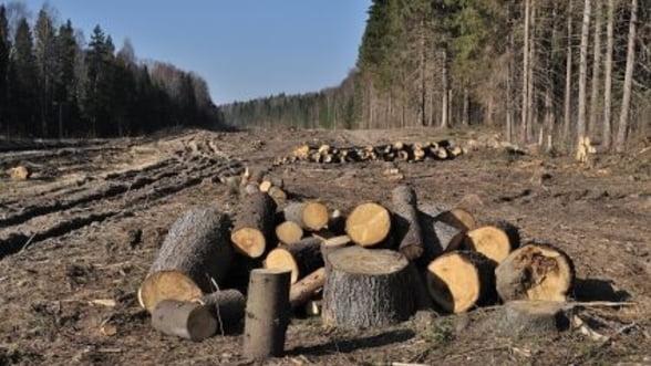 Cinci asociatii din domeniul forestier cer retragerea proiectului de modificare a Codului Silvic din Parlament