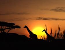Cinci idei preconcepute despre o calatorie in Africa - FOTO