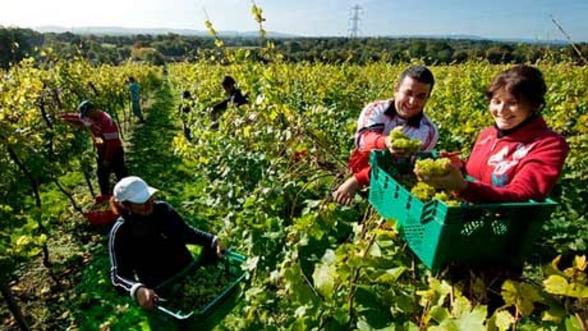 Circa 2,1 milioane romani lucreaza in alte state membre ale UE