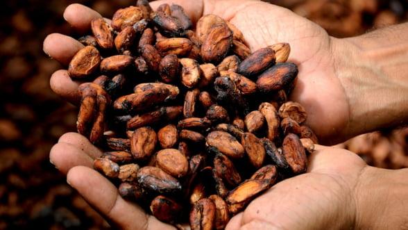 Coasta de Fildes si Ghana au reluat vanzarile de cacao