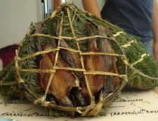 Cobza de pastrav, specialiate culinara de la Dorna-Arini