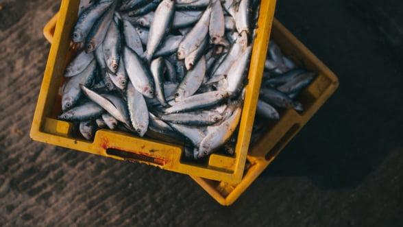 Comercianti: Doar 15% din pestele vandut in Romania provine din apele noastre