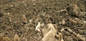 Comisia Europeana a dat in judecata Romania pentru gropile de gunoi neconforme