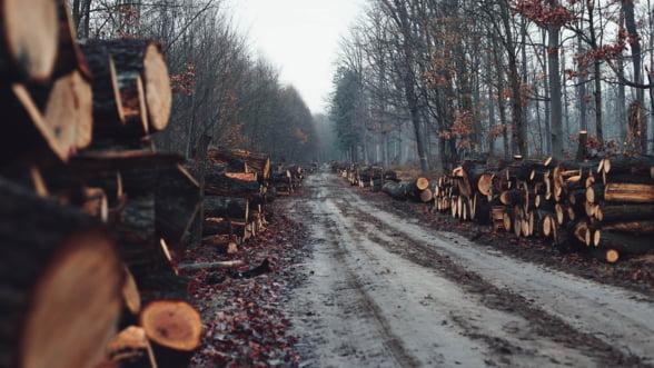 Comisia Europeana deschide procedura de infringement asupra Romaniei pentru exploatarile forestiere ilegale