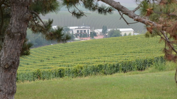 Cramele Recas SA a devenit liderul pietei de vinuri din Romania