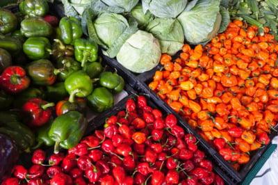 Creditul agricol, solutia pentru finantarea afacerilor din agricultura