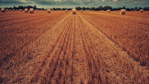 Cultivatorii de cereale din Franta s-au aliat pentru a face fata concurentei din Rusia si Ucraina