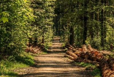 Cum influenteaza scaderea pretului lemnului in Europa industria forestiera din Romania