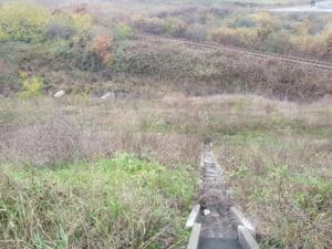 """Cum isi bate joc statul roman de autostrada-muzeu Lugoj-Deva. Contractul a fost reziliat, CNAIR a abandonat totul: """"Peisajul va fi confundat in curand cu o jungla"""""""