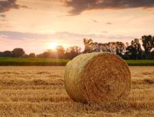 Cum sa incepi si sa dezvolti o afacere in domeniul agricol